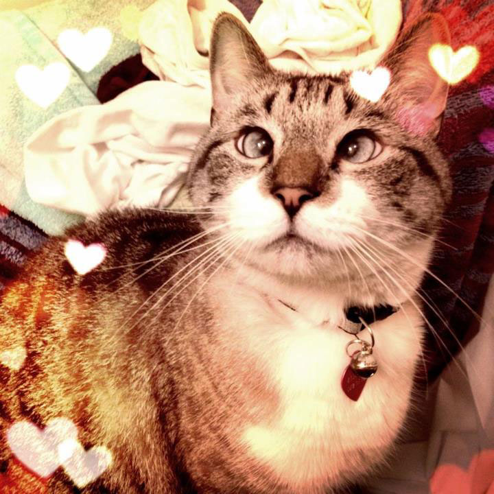 cutest cross eyed cat ever spangles 2 The Cutest Cross Eyed Cat Ever [9 pics]
