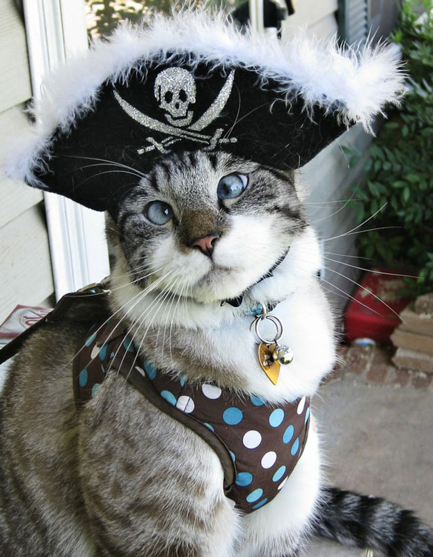 cutest cross eyed cat ever spangles 7 The Cutest Cross Eyed Cat Ever [9 pics]