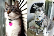 The Cutest Cross-Eyed Cat Ever [9 pics]