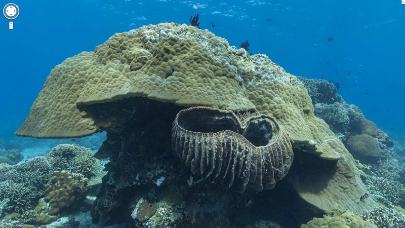 google maps street view apo island philippines Google Adds First Underwater Panoramas to Maps and Street View