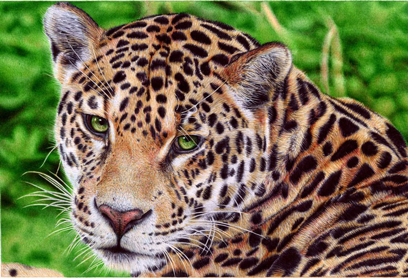 jaguar   ballpoint pen by vianaarts Hyperrealistic Portraits Using Only Ballpoint Pens