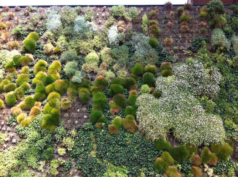 largest vertical garden in the world rozzano italy shopping center 5 The Largest Vertical Garden in the World