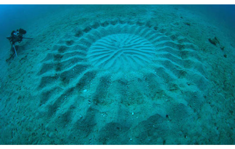 Fish Creates Beautiful Sand Art in the Name of Love