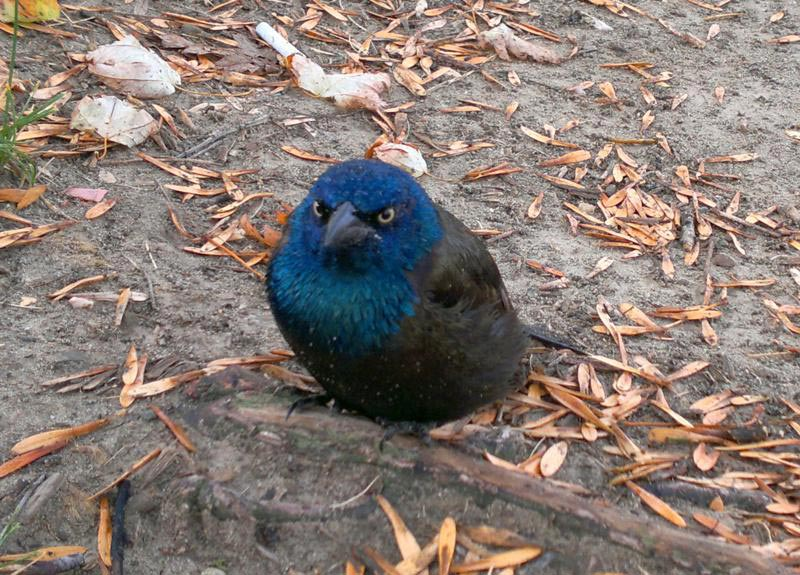 the angriest bird The Shirk Report   Volume 178