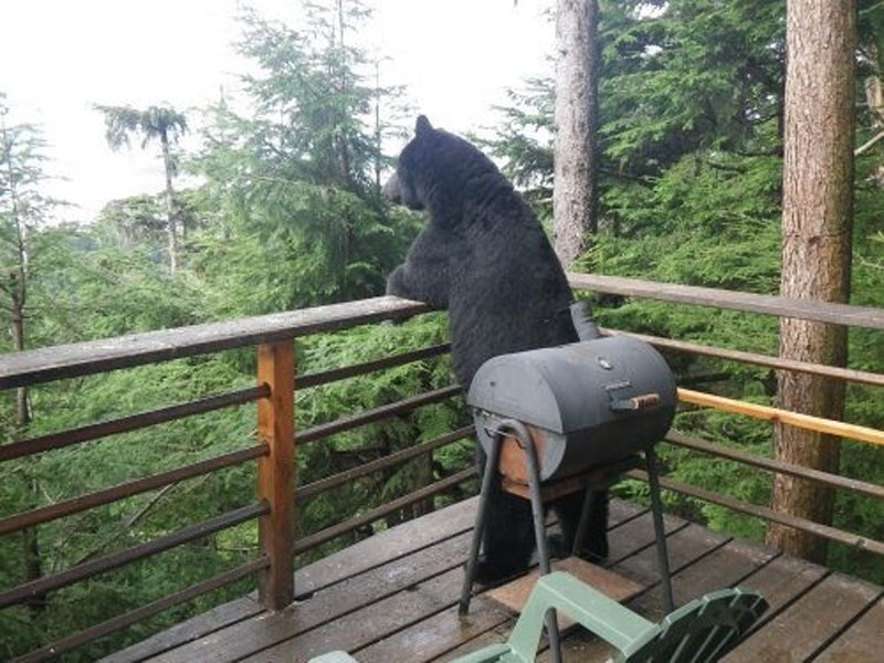 thinking bear standing on deck looking out at forest The Shirk Report   Volume 181