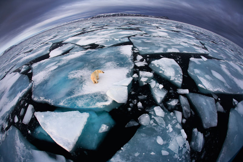 025r anna henly uk ice matters Highlights from the 2012 Wildlife Photographer of the Year