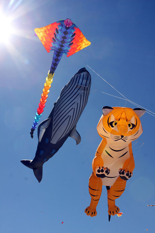 bondi beach festival of the winds 2012 australia nsw The Amazing Kites at the Bondi Beach Festival of the Winds