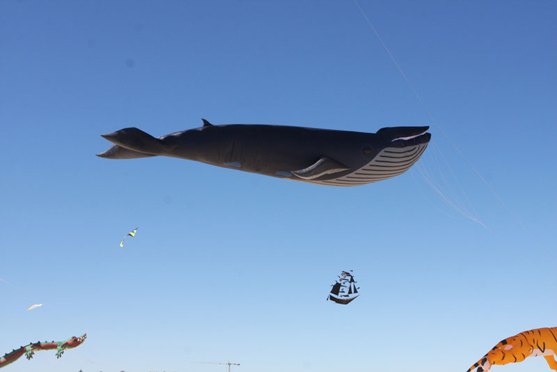 giant whale kite The Amazing Kites at the Bondi Beach Festival of the Winds