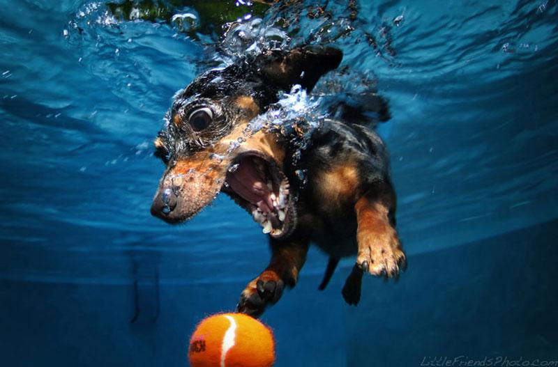 photo of dog underwater rhoda dachshund 7years 10 Hilarious Portraits of Dogs Underwater