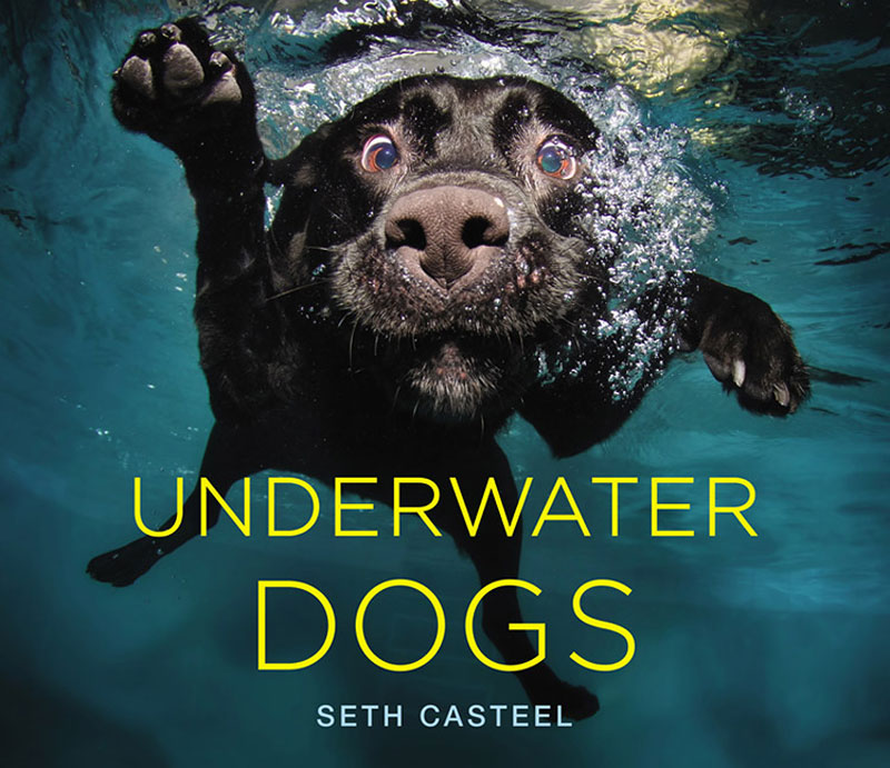 underwater dogs seth casteel 10 Hilarious Portraits of Dogs Underwater