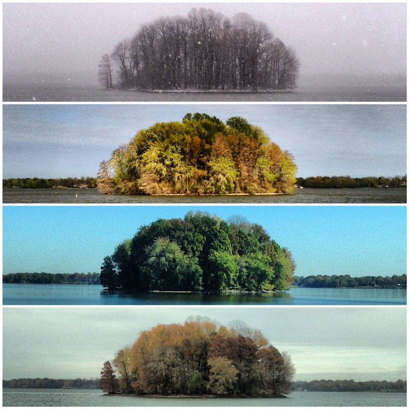 Capturing the Four Seasons in a Single Image