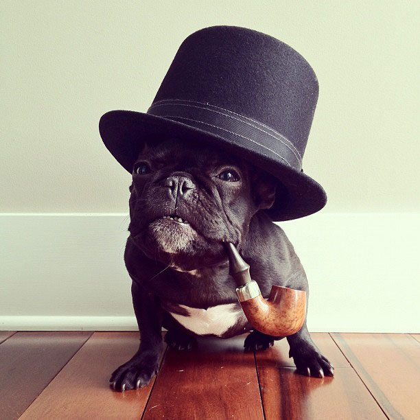 french bulldog dress up in costume instagram trotter 5 The Most Adorable French Bulldog on Instagram