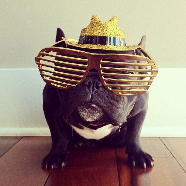 french bulldog dress up in costume instagram trotter 9 The Most Adorable French Bulldog on Instagram