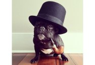 The Most Adorable French Bulldog on Instagram