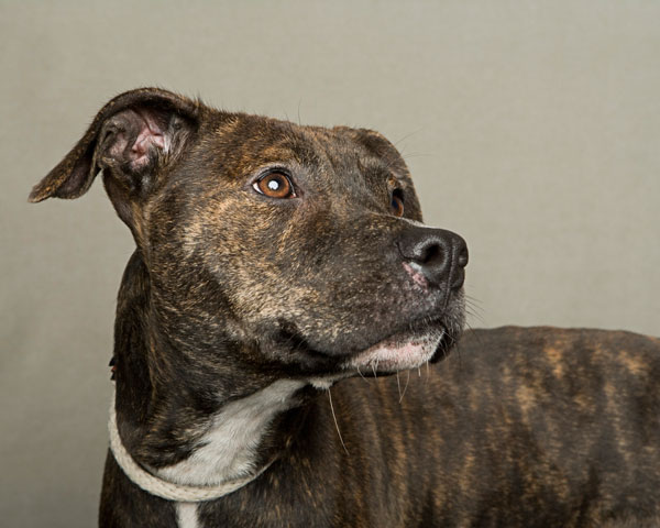 portraits of dogs least likely to be adopted lanola stone 10 The Least Likely to be Adopted