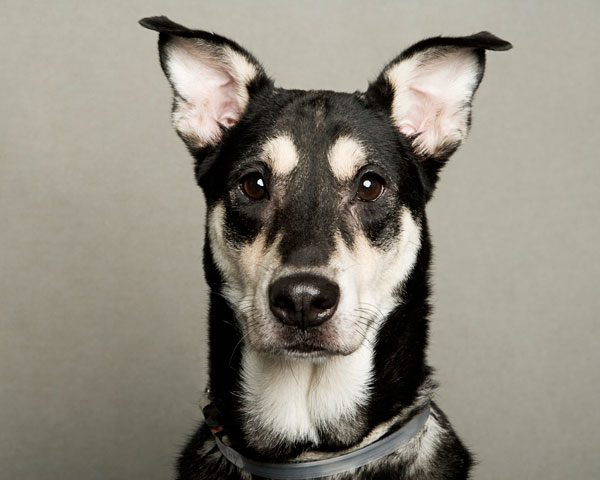 portraits of dogs least likely to be adopted lanola stone 3 The Least Likely to be Adopted