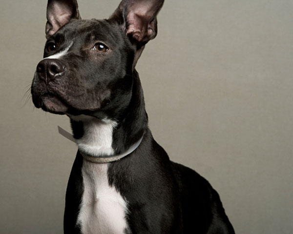 portraits of dogs least likely to be adopted lanola stone 4 The Least Likely to be Adopted