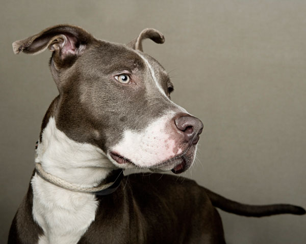 portraits of dogs least likely to be adopted lanola stone 9 The Least Likely to be Adopted