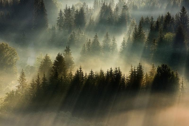 sun kissed landscape photos bathed in fog boguslaw strempel 2 Beautiful Sun Kissed Landscape Photos Bathed in Fog