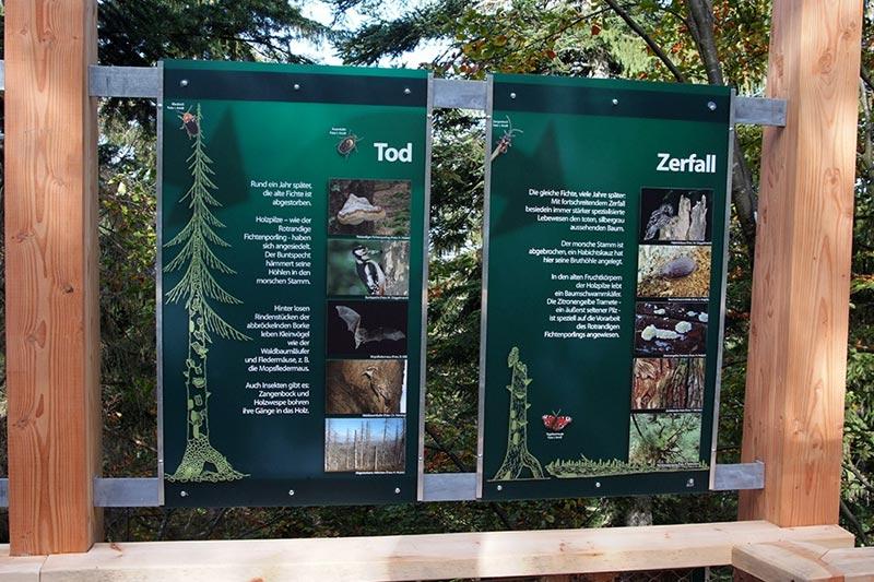 worlds longest tree top walk bavarian forest national park baumwipfelpfad 14 The Longest Tree Top Walk in the World