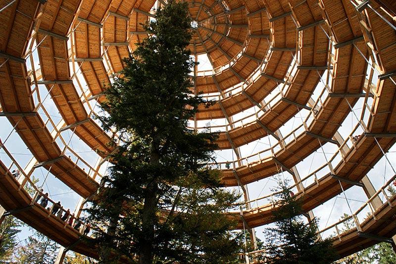 worlds longest tree top walk bavarian forest national park baumwipfelpfad 18 The Longest Tree Top Walk in the World