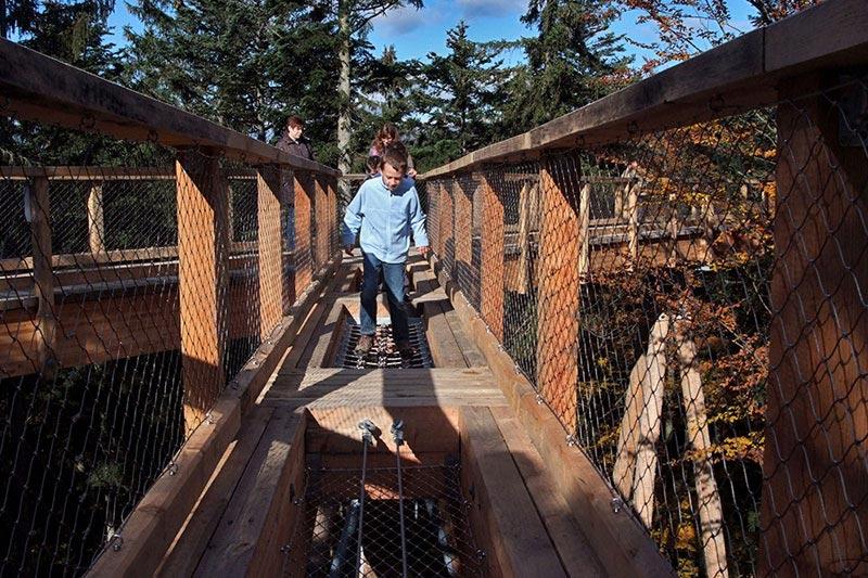 worlds longest tree top walk bavarian forest national park baumwipfelpfad 19 The Longest Tree Top Walk in the World