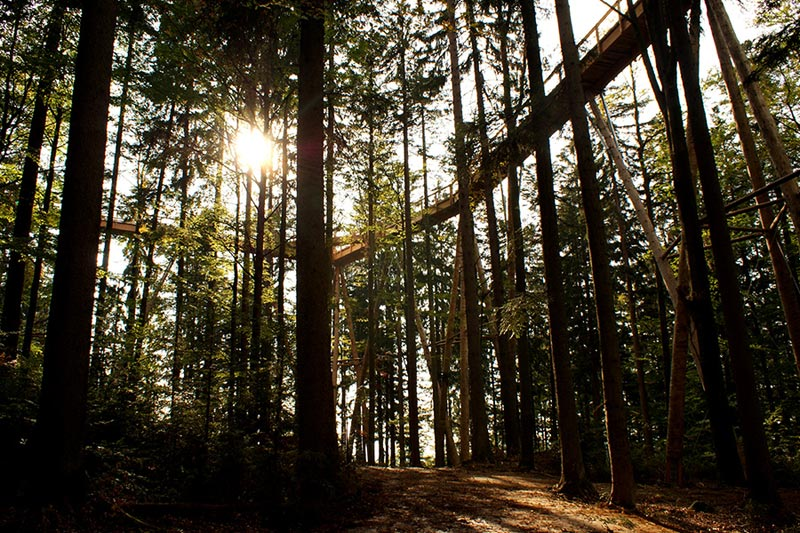 worlds longest tree top walk bavarian forest national park baumwipfelpfad 2 The Longest Tree Top Walk in the World