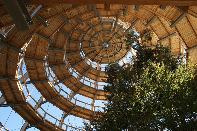 worlds longest tree top walk bavarian forest national park baumwipfelpfad 3 The Longest Tree Top Walk in the World