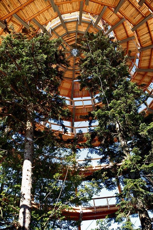 worlds longest tree top walk bavarian forest national park baumwipfelpfad 4 The Longest Tree Top Walk in the World