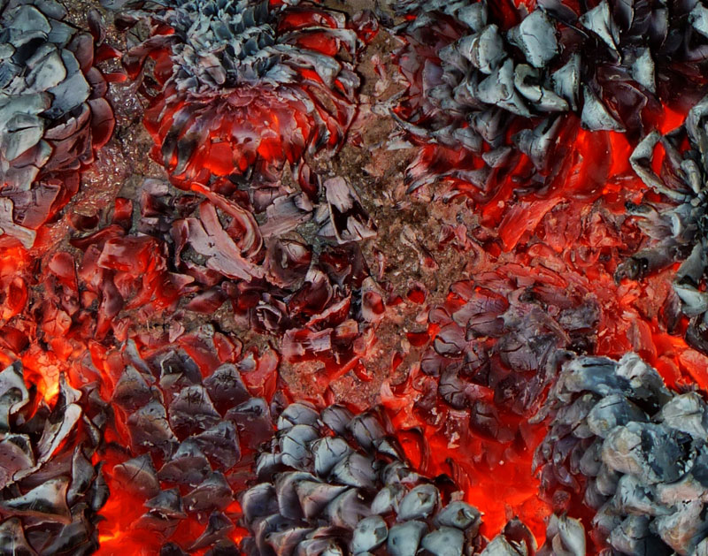close up of pine cones burning in a fire Picture of the Day: Pine Cones Burning in a Fire