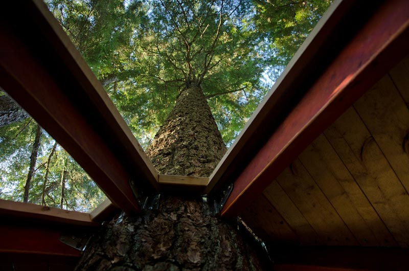 HemLoft secret treehouse hiding in the woods of whistler canada (8)