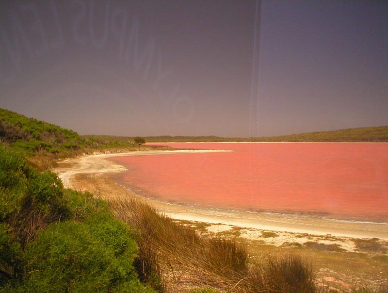 lake hillier pink lake in australia (2)