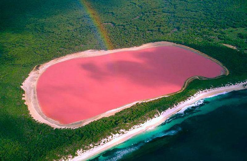 lake hillier pink lake in australia (4)