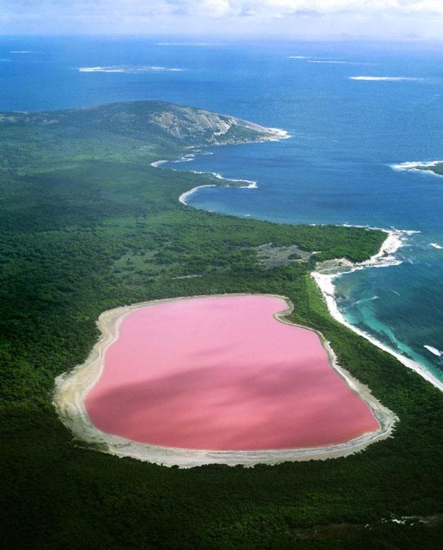 lake hillier pink lake in australia (5)