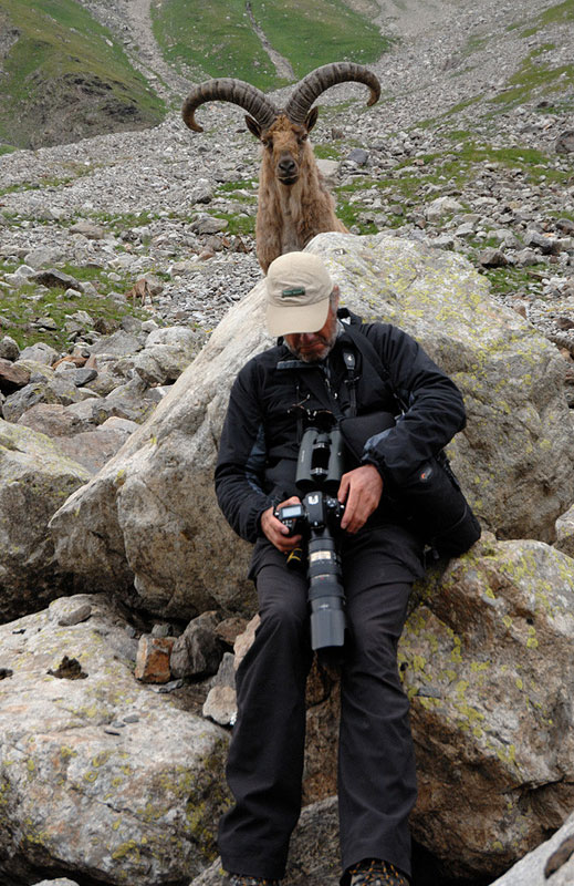 mountain-goat-ram-photobomb-caucasian tur