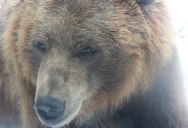 Picture of the Day: Bear With Me
