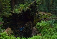 Picture of the Day: Inside a Fallen Giant
