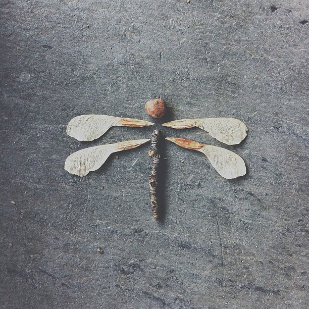 dragonfly brock davis instagram The iPhone Photography of Brock Davis