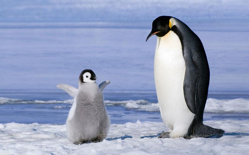 happy baby penguin The Shirk Report   Volume 200