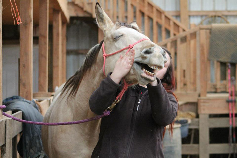 horse loves face rubs The Shirk Report   Volume 202