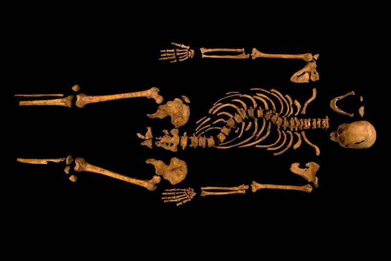 ing richard III skeleton bones body found university of leicester (22)