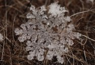 Macro Photos of Individual Snowflakes