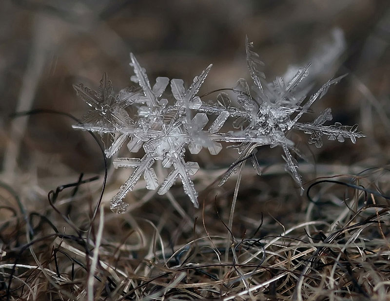 macro photograph of a snowflake by andrew osokin (2)
