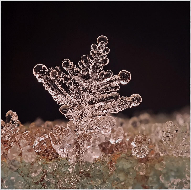 macro photograph of a snowflake by andrew osokin (7)