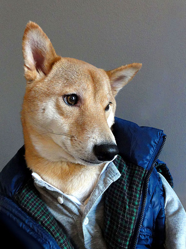 menswear dog dressed in clothes fashion look book (1)