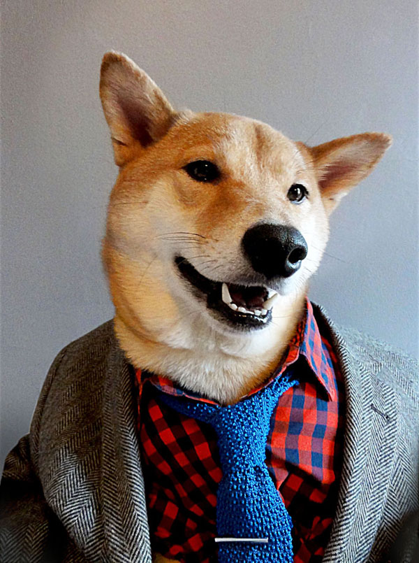 menswear dog dressed in clothes fashion look book (2)