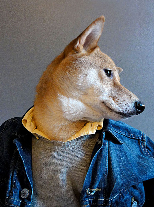 menswear dog dressed in clothes fashion look book (3)