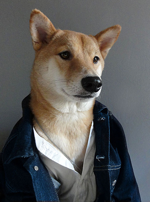 menswear dog dressed in clothes fashion look book (5)