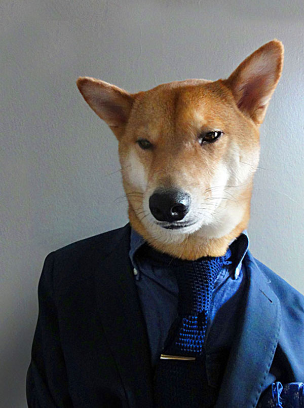 menswear dog dressed in clothes fashion look book (6)
