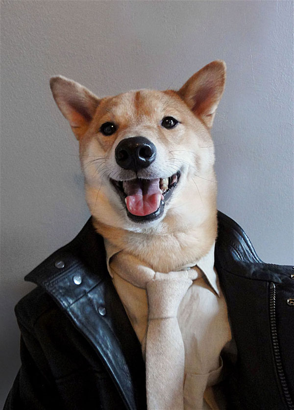 menswear dog dressed in clothes fashion look book (7)